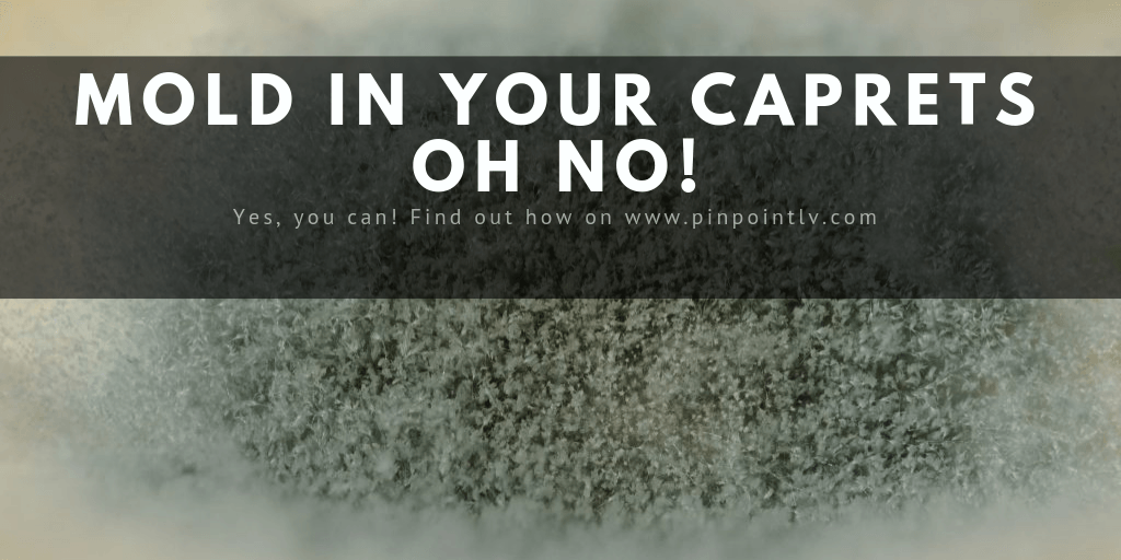 MOLD IN YOUR CARPETS OH NO!