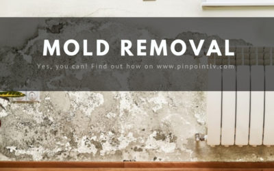 MOLD DAMAGE CLAIMS